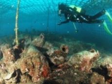 Submarine world in Croatia - Cavtat Diving & Amphoraes   (Part I)